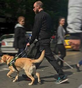 Σκύλοι οδηγοί Ελλάδος