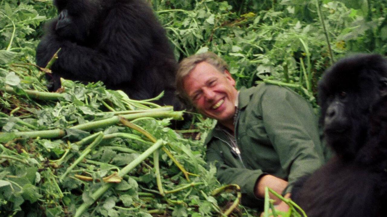 David Attenborough Η ζωή στον πλανήτη μας