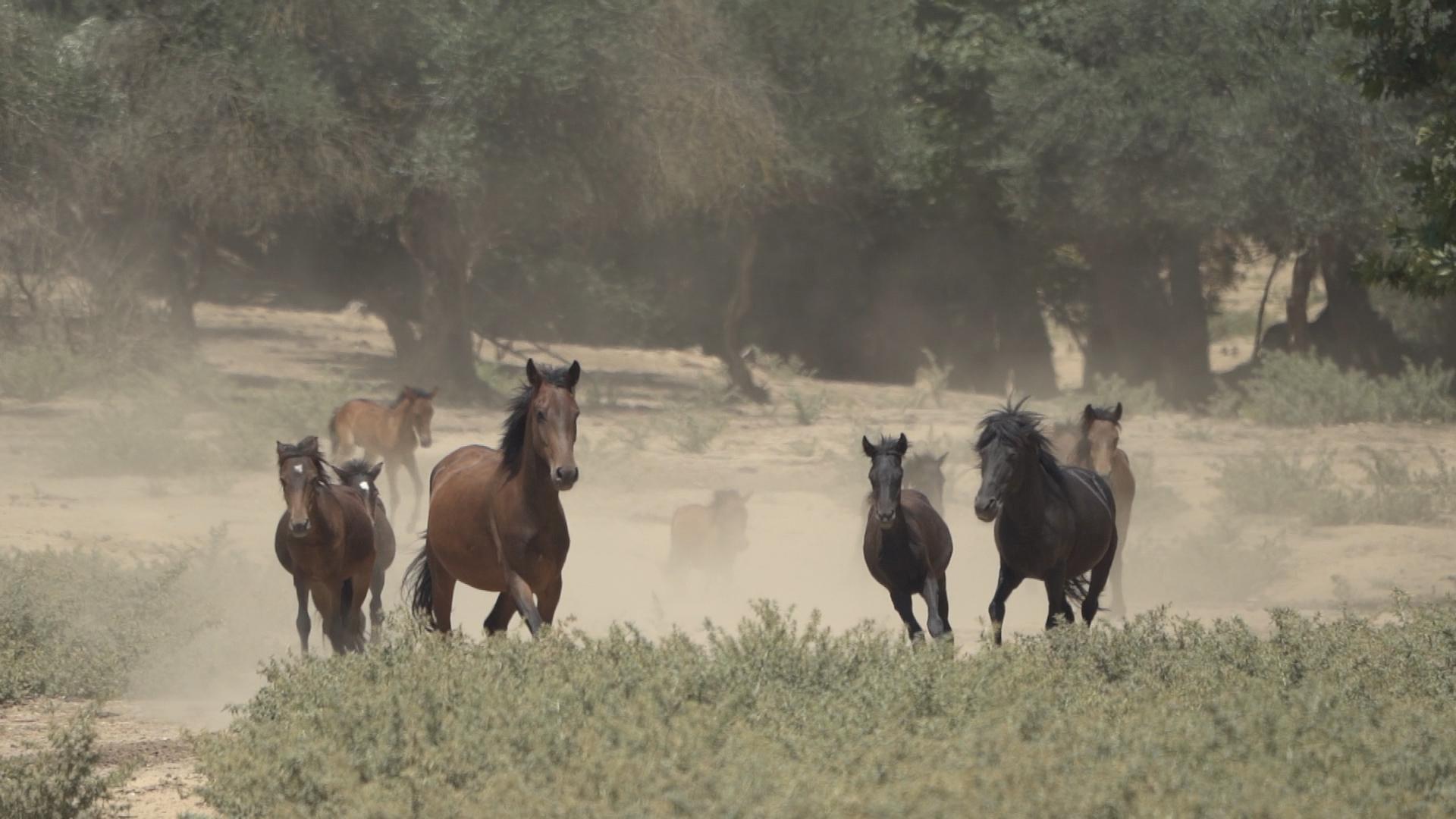 αλογα στα Τρικαλα