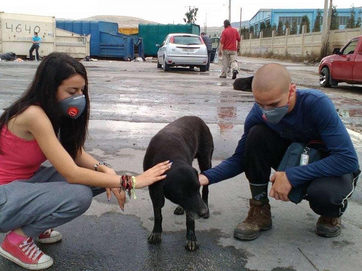 greek animal rescue ταινια