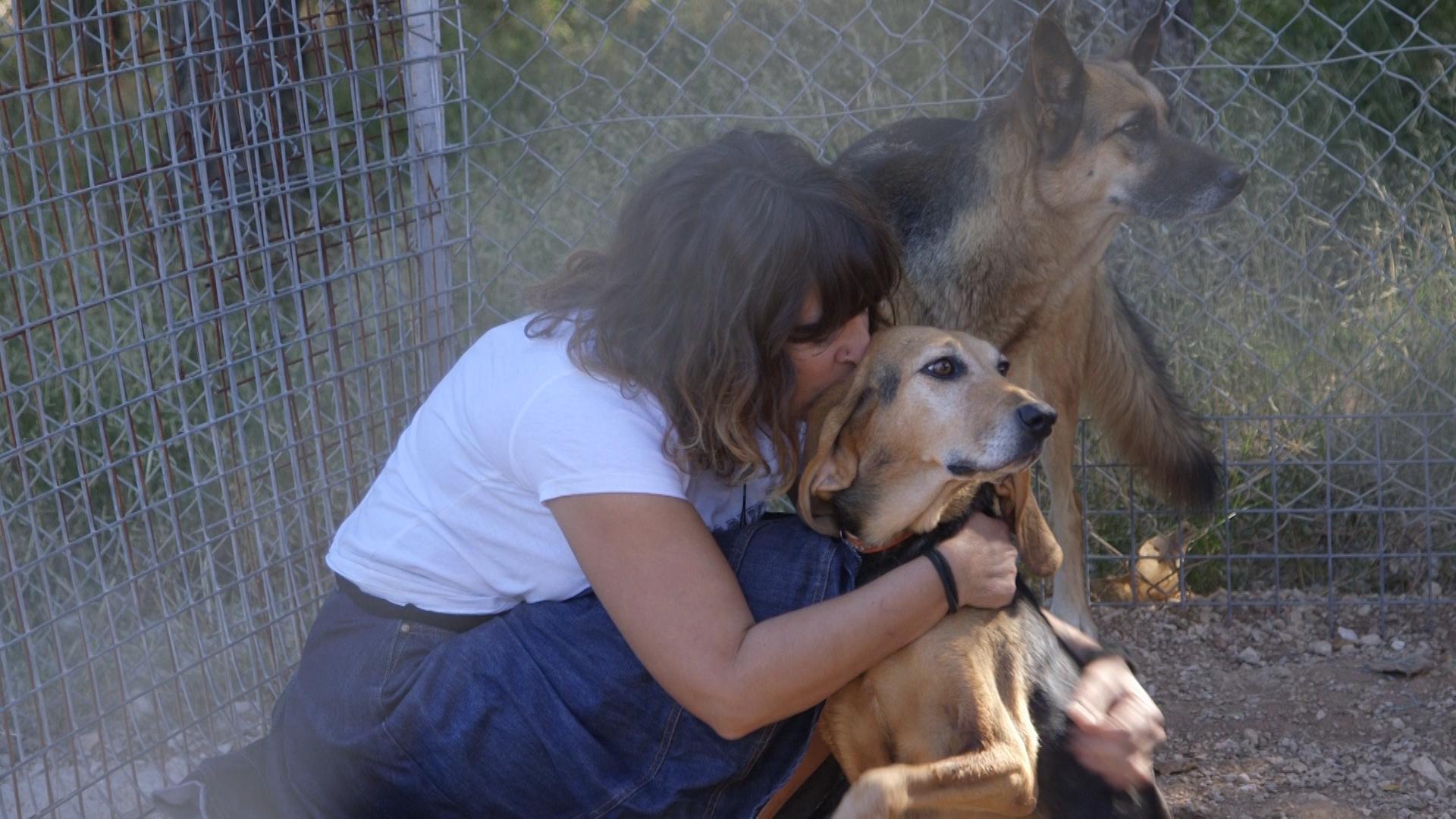 καταφυγιο σκυλων Αιγινα