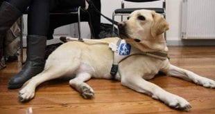 Σκύλοι Οδηγοί Ελλάδας