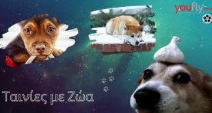 τανίες με σκύλους και άλλα ζώα για πρωταγωνιστές