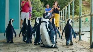 Ντοκιμαντέρ με πιγκουίνους στο netflix