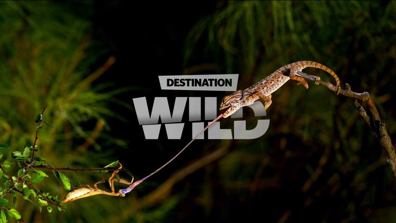 Cosmote TV ντοκιμαντέρ - Destination wild-