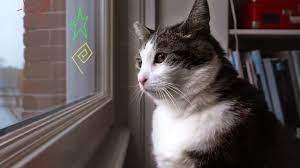 Γάτα κοιτάζει στο παράθυρο για ντοκιμαντέρ στο netflix