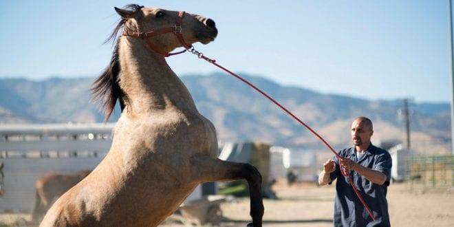 Πλάνο από τη ταινία The Mustang